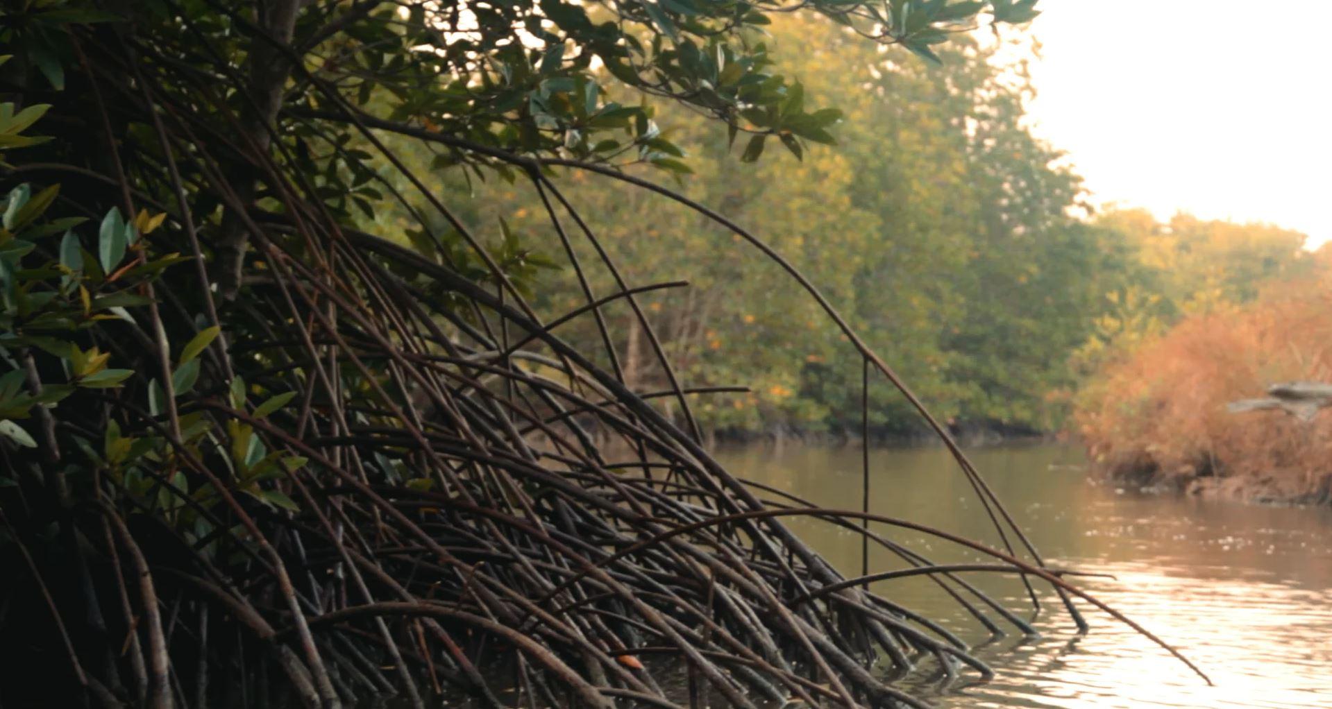 Selva Shrimps imagefilm by Rocc Film